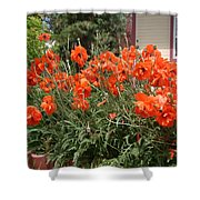 Poppies In Springtime Shower Curtain