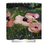 Poppies In The Sun Shower Curtain