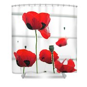 Poppies, Lovely Poppies Shower Curtain