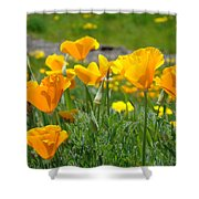 Poppies Meadow Summer Poppy Flowers 18 Wildflowers Poppies Baslee Troutman Shower Curtain