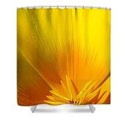 Poppies Orange Poppy Flower Close Up 2 Sunlit Poppy Baslee Troutman Shower Curtain
