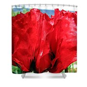 Poppies Plus Shower Curtain