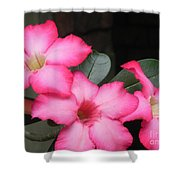 Poppin Pink Flowers Shower Curtain