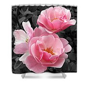 Popping Pink Roses Shower Curtain
