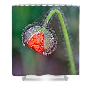 Popping Poppy Shower Curtain
