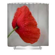 Poppy After The Rain Shower Curtain