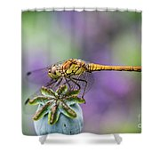 Poppy And The Dragonfly Shower Curtain