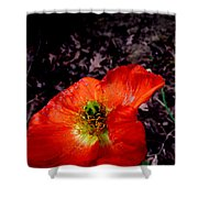 Poppy At Dusk Shower Curtain