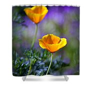 Poppy Ballet Shower Curtain