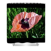 Poppy Beautiful Shower Curtain