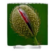 Poppy Bud Shower Curtain