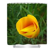 Poppy Flower Bud 9 Orange Poppies Green Meadow Art Prints Baslee Troutman Shower Curtain