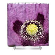Poppy Flower Close Up Shower Curtain