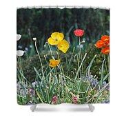 Poppy Flower Mix Shower Curtain