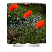 Poppy Foursome Shower Curtain