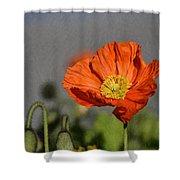 Poppy - Id 16235-142806-2801 Shower Curtain