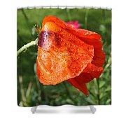 Red Poppy II Shower Curtain