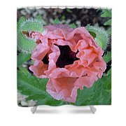 Poppy Opening - 2 Shower Curtain