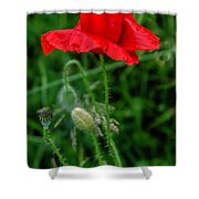 Poppy's Course Of Life Shower Curtain