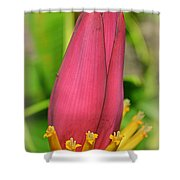 Populus Guzmanantlensis Shower Curtain