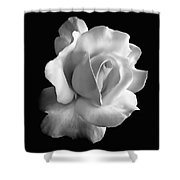 Porcelain Rose Flower Black And White Shower Curtain