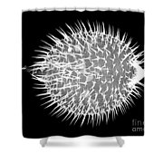 Porcupine Puffer Shower Curtain