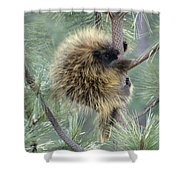 Porcupine Tree Shower Curtain