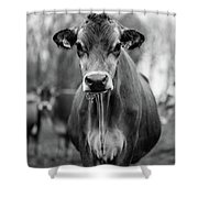 Portrait Of A Dairy Cow In The Rain Stowe Vermont Shower Curtain
