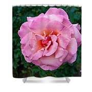 Portland Roses #2 Shower Curtain
