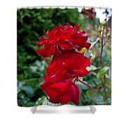Portland Roses #6 Shower Curtain