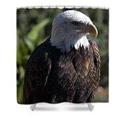 Portrait Bald Eagle  Shower Curtain