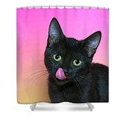 Portrait Hungry Black Kitten Shower Curtain