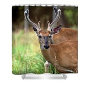 Portrait Of A Beautiful Buck  Shower Curtain