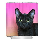 Portrait Of A Black Kitten Shower Curtain