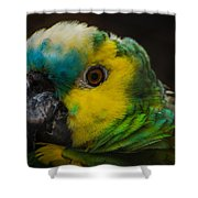Portrait Of A Blue-fronted Parrot Shower Curtain