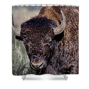 Portrait Of A Buffalo Shower Curtain