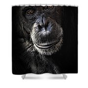 Portrait Of A Chimpanzee Shower Curtain