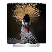 Portrait Of A Crowned Crane 2 Shower Curtain