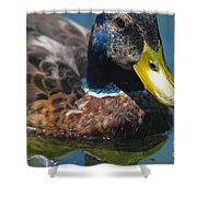 Portrait Of A Duck Shower Curtain