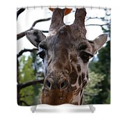 Portrait Of A Giraffe Shower Curtain