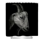 Portrait Of A Goat Shower Curtain