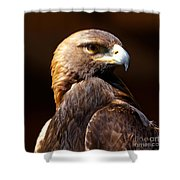 Portrait Of A Golden Eagle Shower Curtain by Sue Harper
