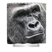 Portrait Of A Gorilla Shower Curtain by Jeff Swanson