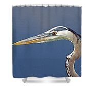 Portrait Of A Great Blue Heron Shower Curtain