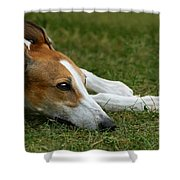 Portrait Of A Greyhound - Soulful Shower Curtain