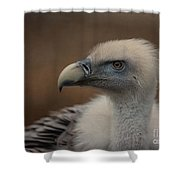 Portrait Of A Griffon Vulture Shower Curtain