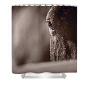 Portrait Of A Horse Kentucky Shower Curtain