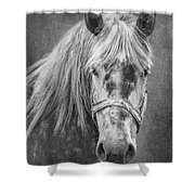 Portrait Of A Horse Shower Curtain