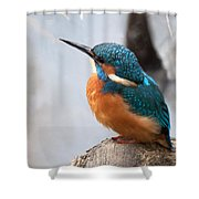 Portrait Of A Kingfisher Shower Curtain
