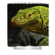 Portrait Of A Komodo Dragon Shower Curtain